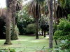 Jardim Tropical Posted on 29th Apr,2007  11:06:49 PM Average Rating=7.00